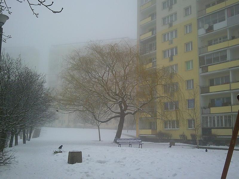 Przeglądasz fotografie z witryny kolonia.gda.pl A jednak jeszcze zima