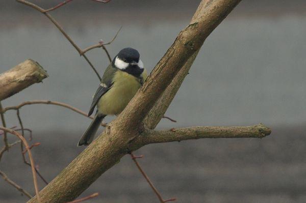 Przeglądasz fotografie z witryny kolonia.gda.pl Ptaki na Kolonii