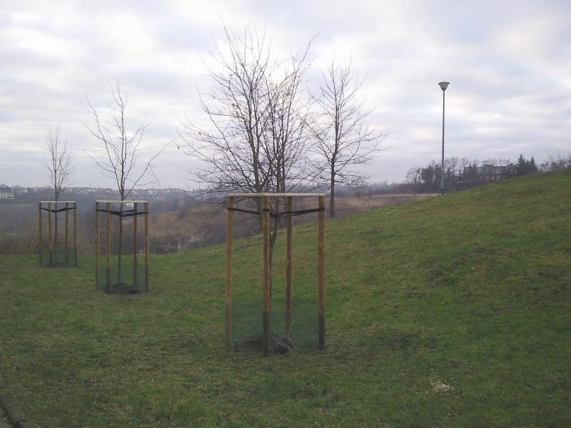 Przeglądasz fotografie z witryny kolonia.gda.pl Drzewa