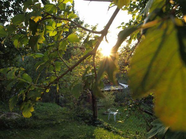 Przeglądasz fotografie z witryny kolonia.gda.pl Zabawy ze słońcem