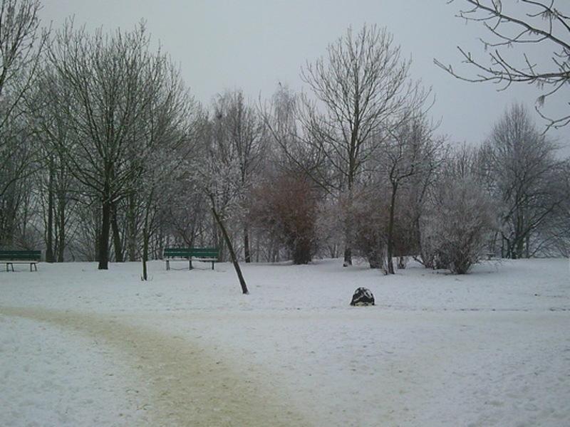 Przeglądasz fotografie z witryny kolonia.gda.pl Pod białą pierzynką
